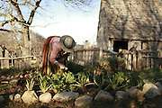 Plimoth Plantation: A living Museum of  a 17th Century English Colony in America<br /> <br /> In the early 17th century a group of separatists, who came to be known as the Pilgrim Fathers, fled the volatile political environment in England and came to North America in order to seek religious separation from the Church of England. They settled at a place, which today is the modern town of Plymouth, in Massachusetts, United States. The colony, established in 1620, is one of earliest successful colonies to be founded by the English and the oldest continuously inhabited English settlement in what was to become the United States of America. Today, Plymouth holds a special role in American history, and many of the people and events surrounding Plymouth Colony have become part of American folklore, including the North American tradition of Thanksgiving. The original settlement of Plymouth Colony is recreated in a faux village called Plimoth Plantation, where actors reenact events and the day-to-day life of the 17th century English colonists.<br /> Plimoth Plantation, located 2.5 miles south of the original 17th century English village, brings colonial Plymouth vividly to life. Here, you will find modest timber-framed houses furnished with reproductions of the types of objects that the Pilgrims owned, aromatic kitchen gardens, animals pens, storehouses, fields and fortification. Role-playing townsfolk in costumes portray actual residents of Plymouth Colony, who are eager to give visitors a piece of history. They have adopted the names, viewpoints and life histories of the people who lived and worked in the Colony in 1627, and each has a unique story to tell. You can ask them about their religious beliefs, education and child rearing, gardens, cooking, or any topic of interest to you. It's like travelling back in time and conversing directly with the Pilgrims.<br /> <br /> The 1627 English Village loosely follows a time line, chronologically representing the calendar year 1627 from late March through N