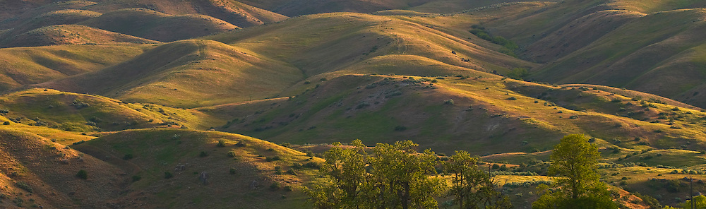 Idaho. The Boise foothills awash in morning sunlight.