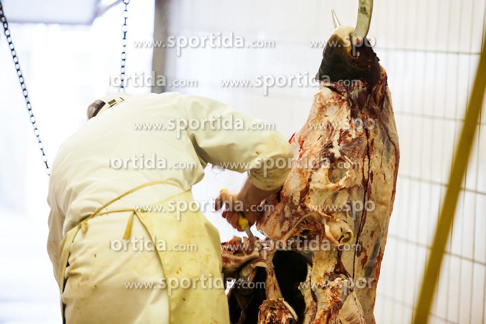 THEMENBILD, regionale Metzger im Fokus. Qualitaet statt Quantitaet, steht bei den meisten mittelstaendischen Fleischhauereien, bei ihren Fleischprodukten im Vordergrund. Mit viel Liebe vom Bauer aus der Region, werden Rinder, Kaelber und Kuehe, wie hier bei der Firma Moelltal Fleisch in Winklern, selbst geschlachtet und zu Qualitaetsprodukten weiterverarbeitet. Nur Schweinefleisch, das die Bauern des Tales nicht oder nicht zur Gaenze selbst produzieren koennen, wird von Vertragspartnern aus anderen Regionen Kaerntens zugekauft und mit Moelltaler Rezepten zu heimischen Spezialitaeten weiterverarbeitet. Im Bild ein Metzger zerteilt per Handarbeit einen Stier. Bild aufgenommen am 28.03.2012. EXPA Pictures © 2012, PhotoCredit: EXPA/ Juergen Feichter