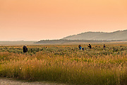 Photographers gather in a field at sunrise to photograph the John Moulton barn in the Mormon Row Historic District in Grand Teton National Park, Wyoming.