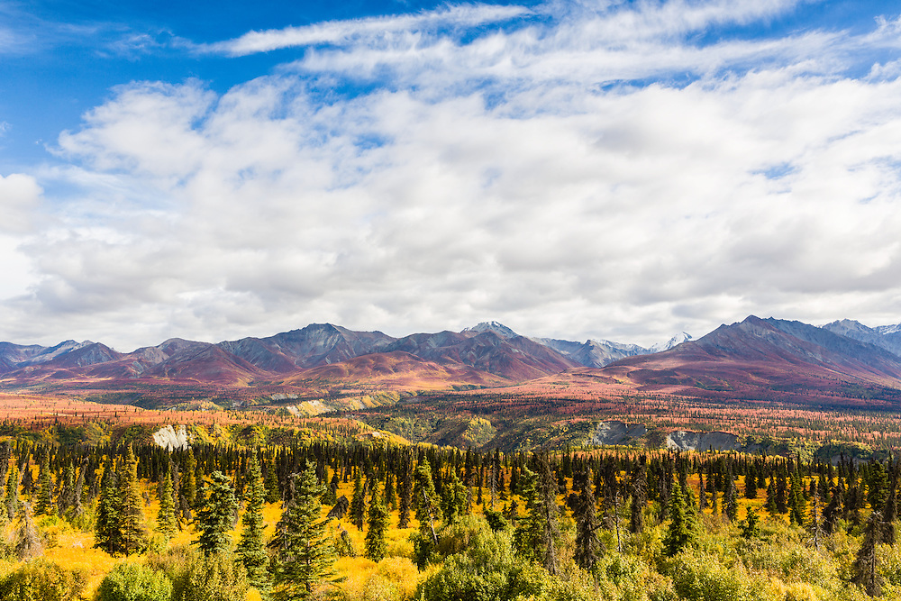 Yellows and reds of autumn cover the landscape of the Chugach Mountains north of the Matanuska Valley in Southcentral Alaska. Afternoon.