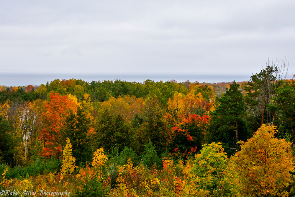 Bright Fall Trees Explode With Color