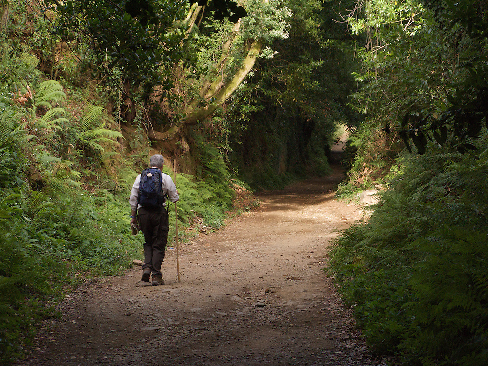 After Pedrouzo there was a long section through the native woodland. Mixed with the woodland were many eucalyptus trees in Galicia - a result of an attempt to turn it into commercial forest. Here a walker passes silently through the woods on his way to Santiago de Compostela.