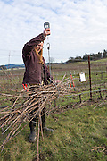 Johan Vineyards, Willamette Valley, Oregon, USA