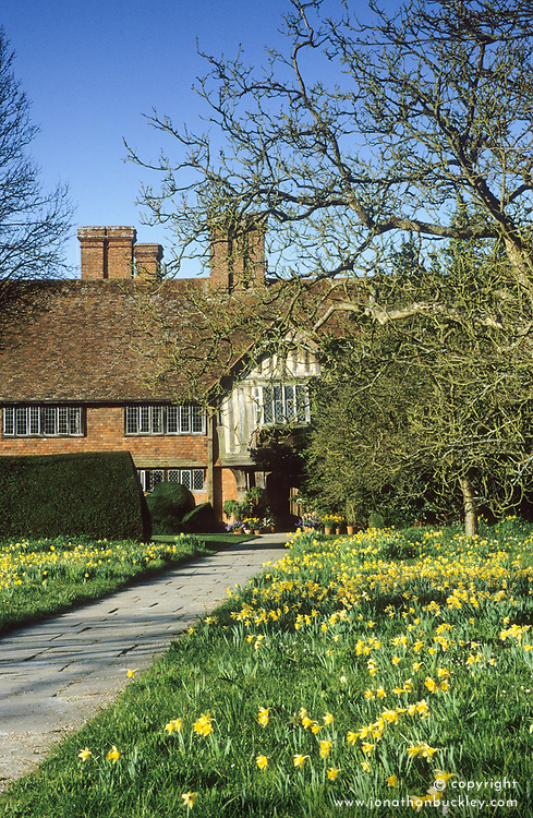 The front meadow at Great Dixter in spring with Narcissus pseudonarcissus. Paved Yorkstone path leading to house