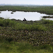 Fishermen hunt for mud fish along the banks of Lake Victoria. Mud fish, used for bait, have appeared in Lake Victoria for the first time because of the water hyacinth infestation. Pollution of the lake is causing water hyacinth to grow out of control and is a sign of the environmental problems affecting the lake.