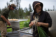 LIVING OFF THE GRID<br /> Josh Jasso and Rachel Burke are preparing the organic vegetables for the Farmer's Market in Homer, Alaska.<br /> Anchor Point, Alaska, USA