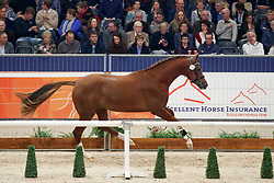359, King Fan Weerdenbras<br /> KWPN Stallionshow - 's Hertogenbosch 2018<br /> © Hippo Foto - Dirk Caremans<br /> 02/02/2018