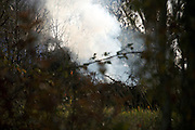 burning of raked leaves and twigs during fall season