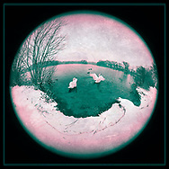 Wantagh, New York, USA. February 20, 2019. During snowfall, 2 swans and some mallards swim in Mill Pond Park on Long Island. 180 degree fisheye view of Nassau County public park.