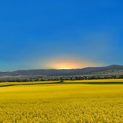 A 13 photo Panoramic stitch of the canola fields between Goulburn and Braidwood.