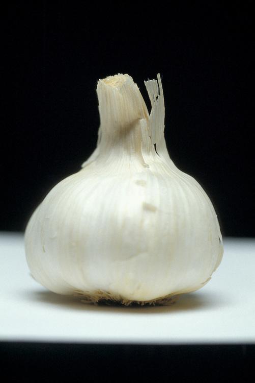 still life of whole garlic bulb
