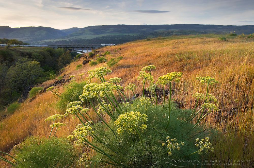 Rowena Crest, Columbia River Gorge National Scenic Area, Oregon
