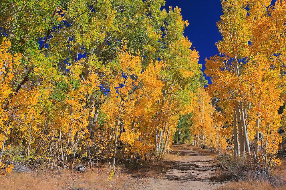 North Lake Road View - Fall Color