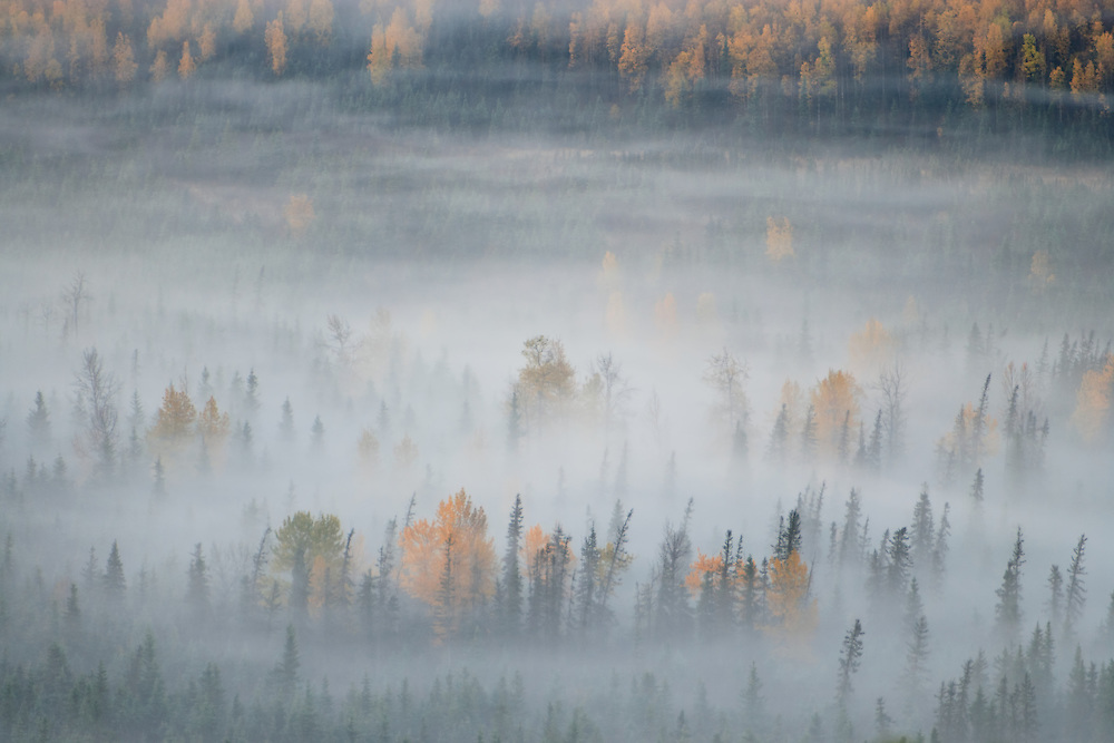 Ground fog rolls into Eagle River Valley in Chugach State Park during the peak of fall colors in Eagle River in Southcentral Alaska. Morning.