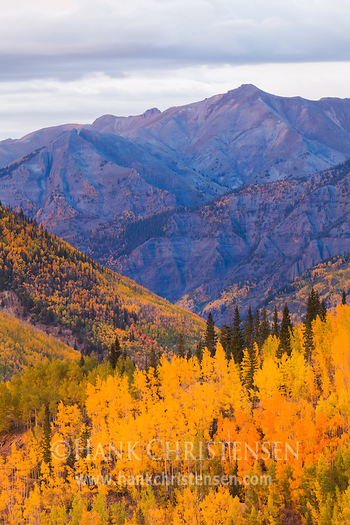 Abrams mountain rises above lower slopes filled with bright fall colors, Ouray Colorado