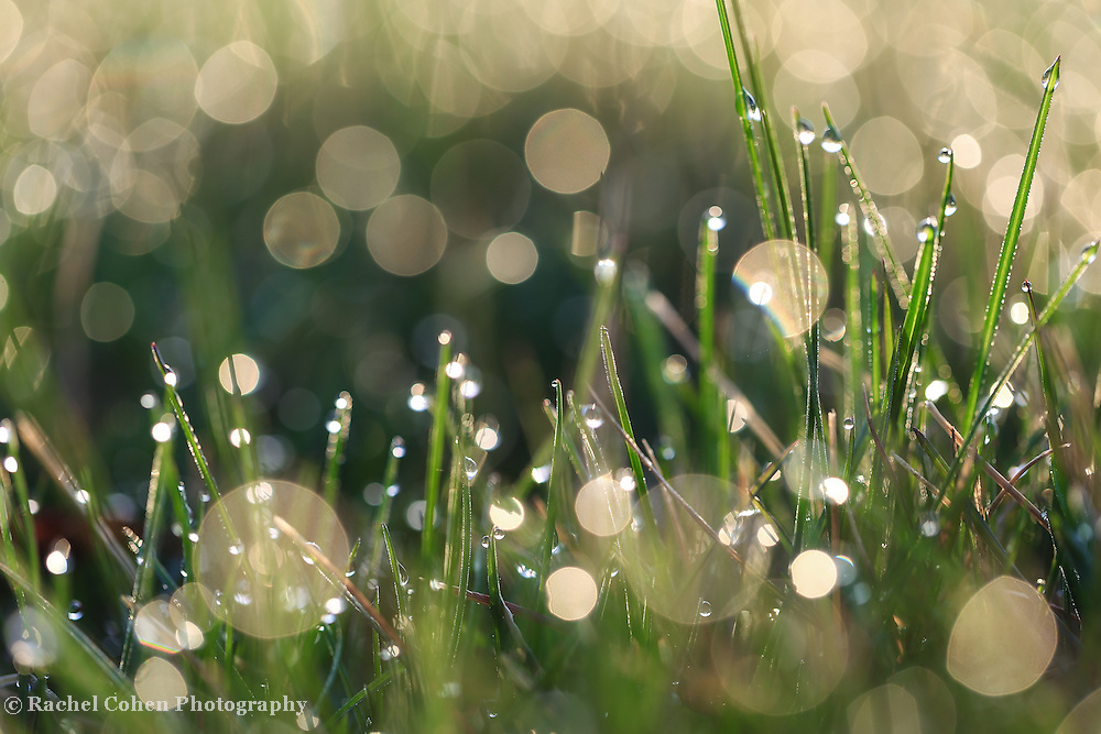 &quot;Morning Magic&quot; 2<br /> <br /> Sunlight dances in the grass in this beautiful nature abstract!
