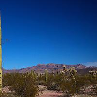 North America, USA, Arizona, Organ Pipe Cactus National Monument.