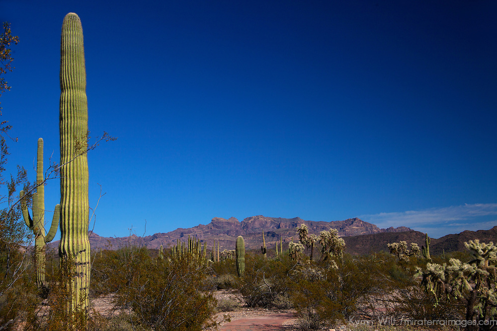 North America, USA, Arizona, Organ Pipe Cactus National Monument.