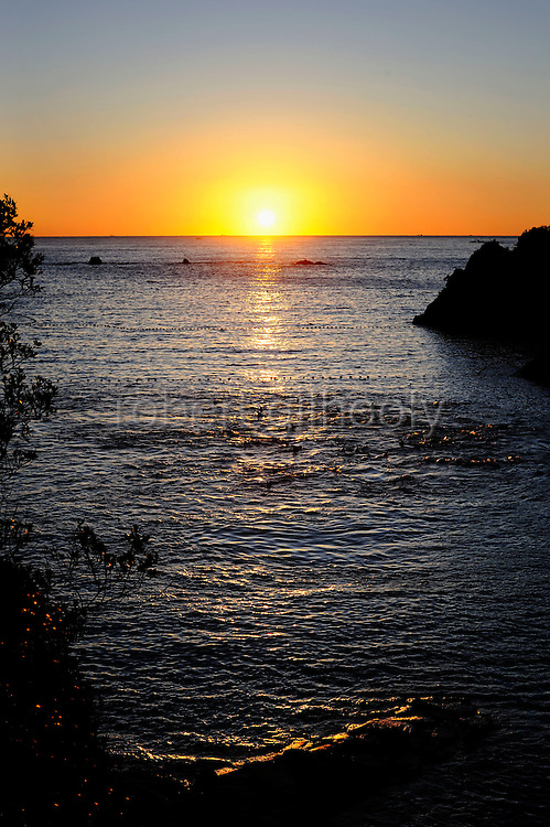 About 100 bottle neck and short fin dolphins swim at sunrise in the cove that is at the center of a controversial film, due for release in the UK next month, in Taiji, Japan on 10 September 2009. The captured dolphins were the first catch of the season at Taiji, which has come under increased international pressure following the release of a film documenting their capture and slaughter in the town..Photographer: Robert Gilhoolyy.