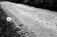 strada di campagna in contrada Jannuzzo