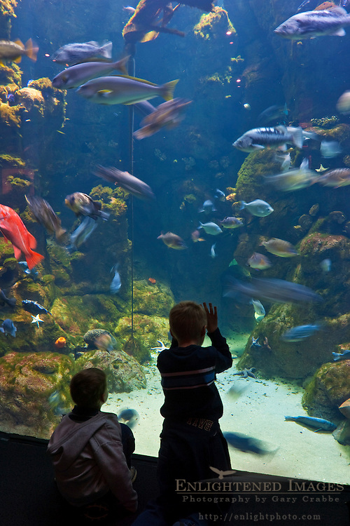 Kids in front of exhibit tank at Steinhart Aquarium, California Academy of Sciences, Golden Gate Park, San Francisco, California