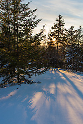 The sun shines through spruce trees on Hanson Top on Green Mountain in Effingham, New Hampshire. Winter. Sunset.