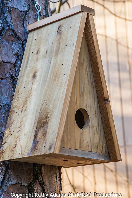 Homemade nest box for a tufted titmouse, placed on a loblolly pine, The Woodlands, Texas. birdhouse, bird house