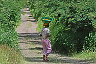 Santiago, Cape Verde islands.  A Cape Verdean girl walks along a country track carrying a basket of bananas on her head.  Bananas, along with corn, sugar cane, coffee and mangoes, are the main agricultural produce of Santiago.  Banana plantations cover much of the mountain slopes of Santiago.  Cape Verde is part of the APC, or Afro-Caribbean-Pacific banana exporters.  These are basically small countries that have long-established trading links with Europe, mostly dating back to colonial times.  These trading links have allowed duty free import of bananas to ACP members, offering some protection for small economies, such as Cape Verde's.  Recent (2005) World Trade organisation (WTO) rulings against banana import tariffs from within the EU means that ACP members must now complete with low prices set by the giant trans-national companies primarily exporting from Latin America.  Formerly a major exporter of bananas to Portugal, Cape Verde no longer exports significant amounts of bananas to the European Union.