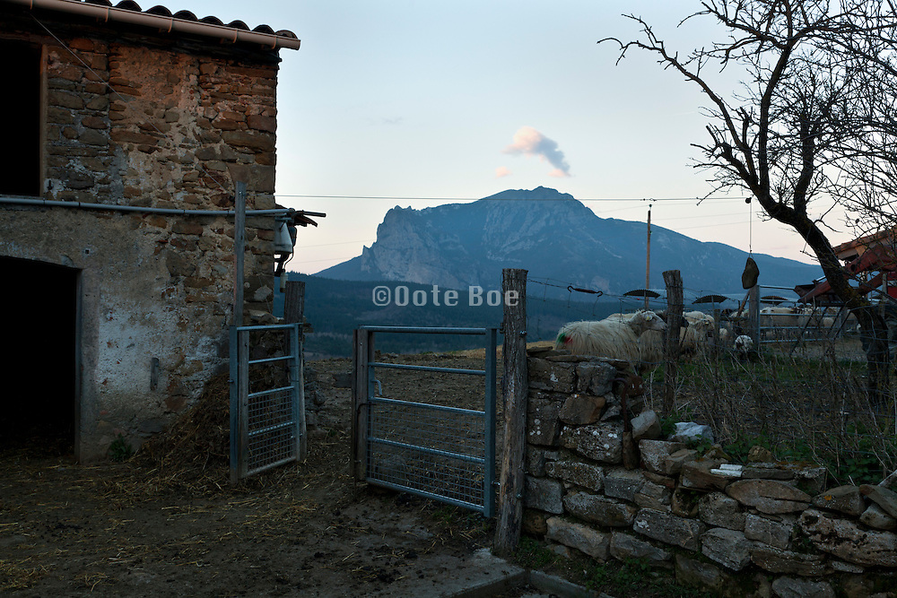 sheep farm with Pic de Bugarach in the background South France