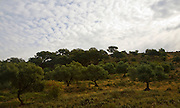 Mackerel sky clouds and trees in Sierra de Grazalema natural park, Cadiz province, Spain