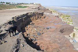 Eroded cliffs and concrete sea defences at Tunstall; East Yorkshire; England