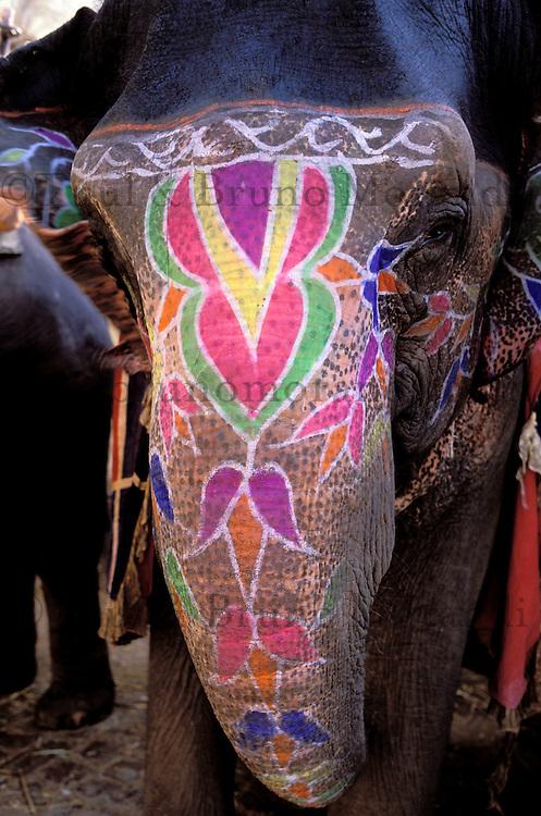 Inde. Rajasthan. Jaïpur. Éléphant peint au fort d'Amber. India. Rajasthan. Jaïpur. Elephant at the Amber fort.