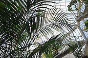 Schlosspark Pillnitz, Palmenhaus, Dresden, Sachsen, Deutschland.|.Pillnitz Castle Gardens, palmhouse, Dresden, Germany
