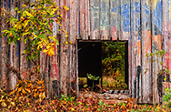 Cameron painted barn and fall leaves landscape