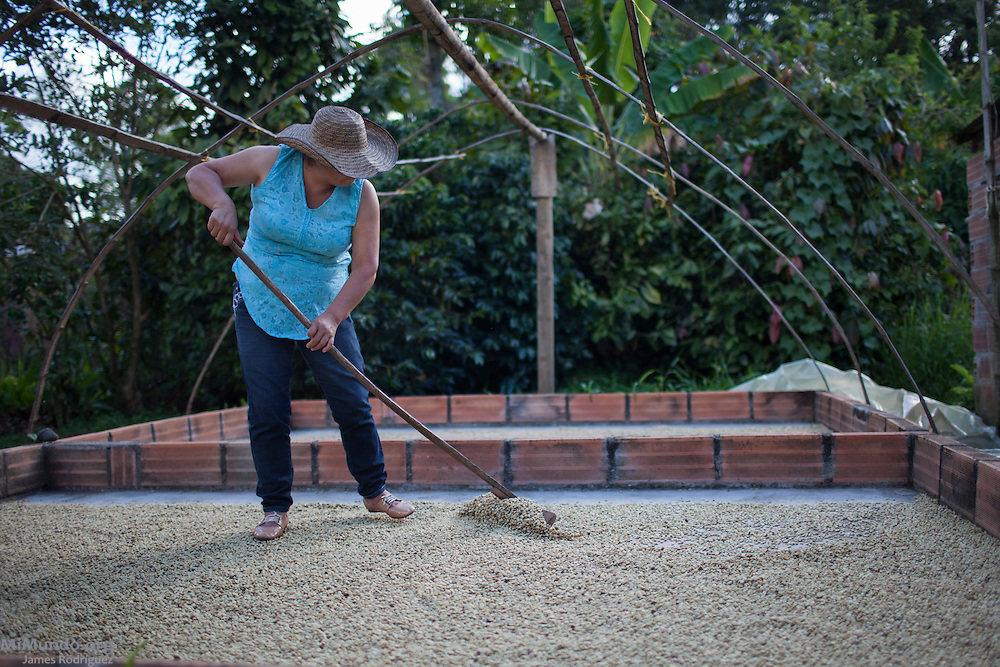 """Amanda González Yagarí, 46, Embera Chami woman, coffee producer, and current governess of the Karmata Rua Indigenous Reserve, dries her coffee harvest. She declares: """"We are against metal mining because we have seen the deterioration of other communities at the hands of this industry. We must protect our territory in order to maintain our unity and culture. We do not want the decomposition of our family or social structures."""" It is estimated that 90% of Antioquia's territory has been licensed for exploration or exploitation. Karmata Rua-Cristianía, Jardín, Antioquia, Colombia. October 6, 2013."""