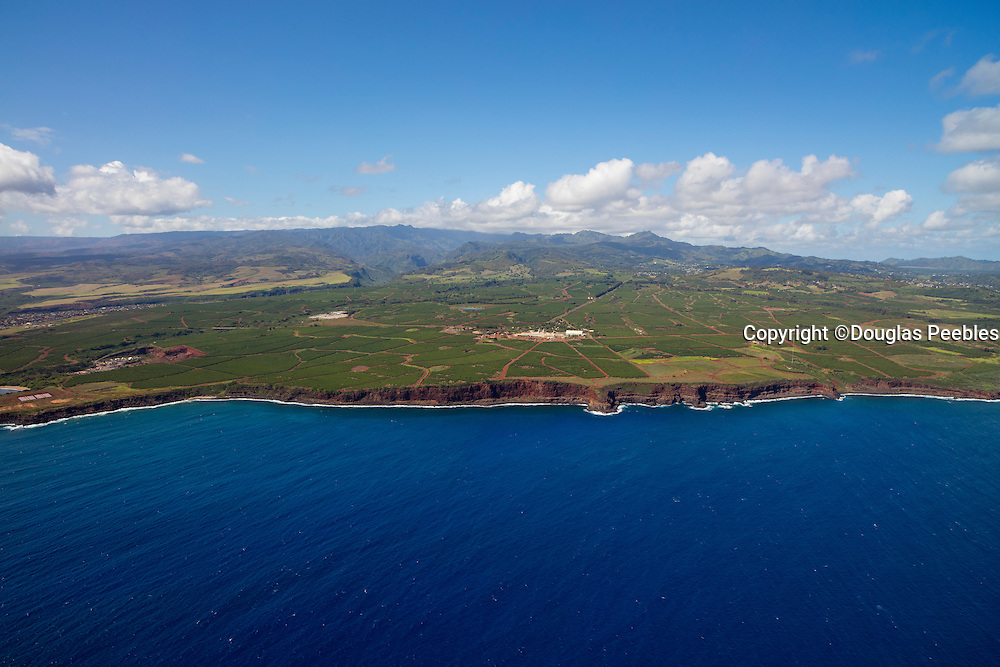 Coffee Farm; Kaloa; Kauai; Hawaii; aerial