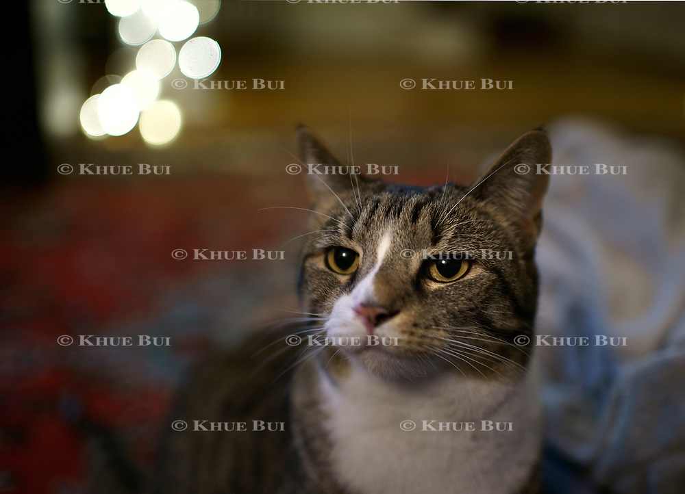 Mocha poses for photos on December 24, 2017, in Richmond, VA.<br /> <br /> Photo by Khue Bui