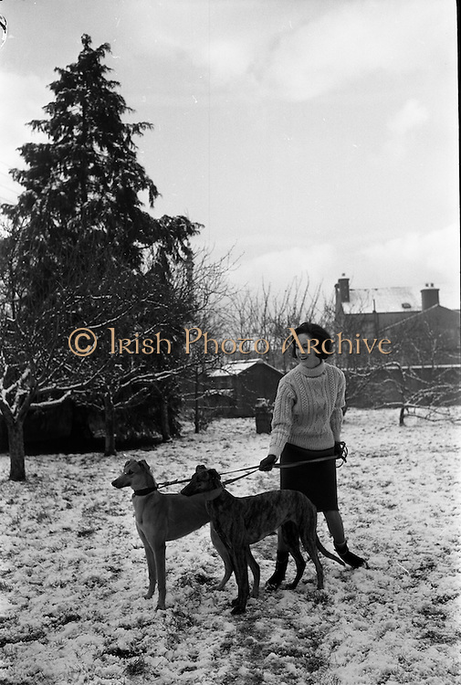 27/12/1962<br /> 12/27/1962<br /> 27 December 1962<br /> Orla Ní Shíochain, Dublin Model working in Paris home for Christmas at Rathfarnham Park, Dublin with two of her parent's greyhounds.