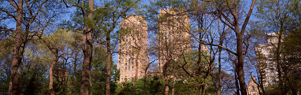 Central Park trees with buildings in background