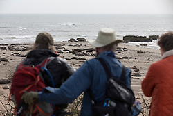 Hikers survey the elephant seals on the beaches of Ano Nuevo State Park in Pescadero, Calif., Friday, March 3, 2017, where the breeding season for Earth's largest pinnipeds is winding down. (Photo by D. Ross Cameron)