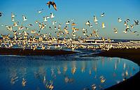 090-P74900<br /> <br /> Sonoma Coast State Beach<br /> &copy;2011, California State Parks<br /> Photo by Brian Baer
