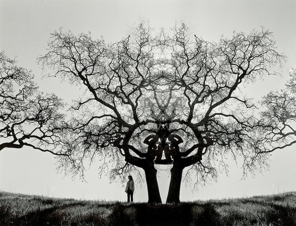 Mandala Tree