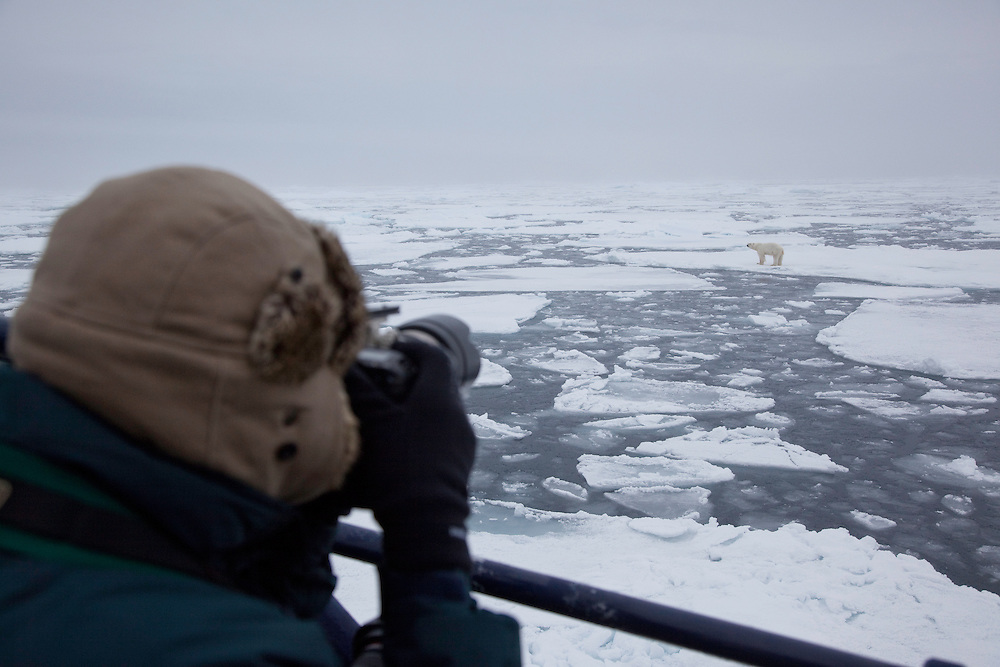 Photographer and polar bear (Ursus maritimus), Svalbard, Norway.