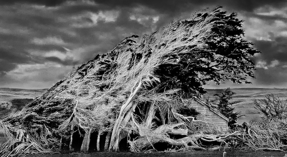 The winds from the Antartic circle blow constantly and cause the trees to grow in a form that embraces the barn on the southern island of New Zealand.<br />