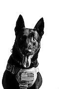 Luigi<br /> Air Force<br /> K9<br /> Security Forces, K-9<br /> Present<br /> <br /> Veterans Portrait Project<br /> 802d Security Forces Squadron<br /> San Antonio, TX
