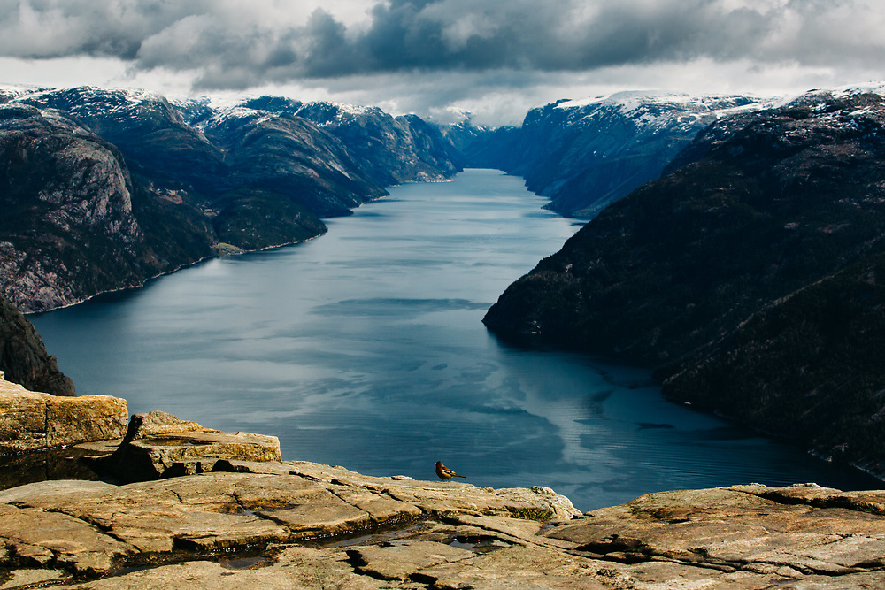 A bird stands on the edge of Preikestolen (Pulpit Rock) in Norway
