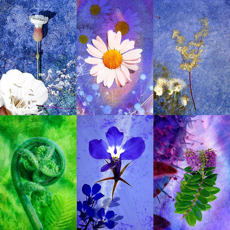 Irish flowers / fa048