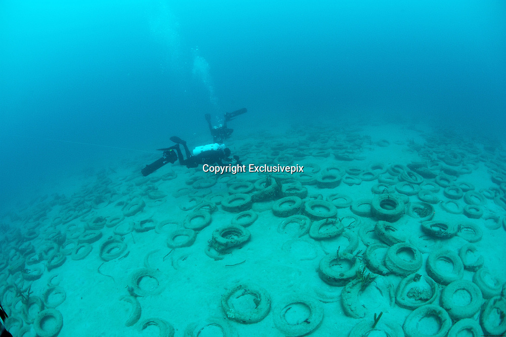 Osborne Reef: A Failed Artificial Reef Of Discarded Tires<br /> <br /> About 7,000 feet offshore of Sunrise Boulevard off the coast of Fort Lauderdale, Florida, lies an underwater wasteland of rotting tires. This is Osborne Reef, an underwater cemetery of 2 million tires that were placed there in the 1970s as a part of a failed ecological operation to create an artificial reef. Over the years, many of the tires were dislodged by tropical storms and hurricanes and caused damage to nearby existing coral reefs. Forty years later, the tires are still there causing more harm than good in the coastal Florida waters.<br /> <br /> Osborn Reef was the brainchild of a non-profit group called Broward Artificial Reef, or BARINC, composed of a group of fishermen, back in the spring of 1972. The idea was to create a reef using old tires that were piling up around the county's landfills and rural areas. This was before recycling caught on. They were convinced that corals would attach and grow on the tires and provide additional habitat for marine life. It was a well intentioned but not a particularly well thought out plan.<br /> With the support of US Army Corps of Engineers and more than 100 privately owned vessels, placement of the tires began over 36 acres of the ocean floor, 7,000 feet offshore in 65 feet of water. The Goodyear Tire and Rubber Company provided equipment for the auspicious undertaking, even supporting the project so far as to drop a gold-painted tire to christen the site. The tires were bundled together with steel clips and nylon rope and lowered onto the sea floor. However, the saline waters of the ocean quickly corroded these materials causing the tires to separate, and carried them away by ocean currents and waves. The tires, with their newfound mobility, not only destroyed any marine life that had thus far grown on the tires, it effectively prevented the growth of any new organisms. Besides, the loose tires scoured the ocean floor and damaged existing reefs in the area. Thousands of tir