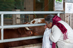 © Licensed to London News Pictures. 05/09/2015. Watford, UK. A woman says a prayer to one of the many pampered cows in the cow shed at the biggest Janmashtami festival outside of India at the Bhaktivedanta Manor Hare Krishna Temple in Watford, Hertfordshire.  The event celebrates the birth of Lord Krishna and the festival  includes music, dance, food, dramas and more. Photo credit : Stephen Chung/LNP